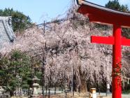 2010_0320野依八幡神社0001