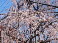 2010_0320野依八幡神社0002