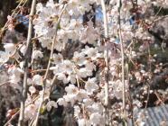 2010_0320野依八幡神社0006