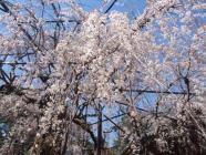 2010_0320野依八幡神社0007