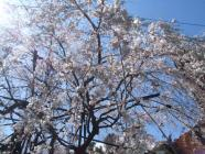 2010_0320野依八幡神社0008