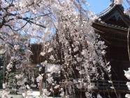 2010_0320野依八幡神社0009