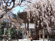 2010_0320野依八幡神社0011