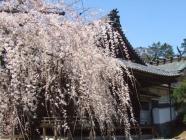 2010_0320野依八幡神社0013
