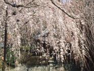 2010_0320野依八幡神社0014