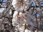2010_0320野依八幡神社0010