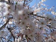2010_0320野依八幡神社0012