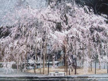 2010_0320野依八幡神社0004