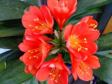 2011_0419_122138-DSCF3831.jpg