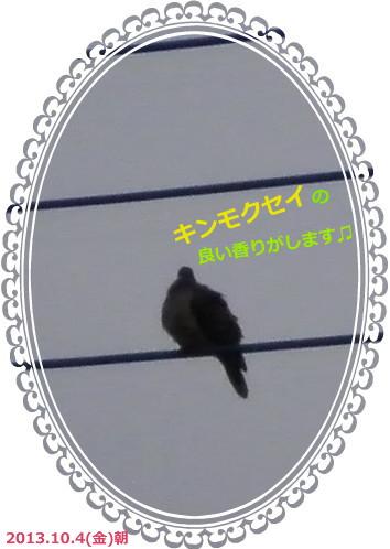 花ブ2013104-2