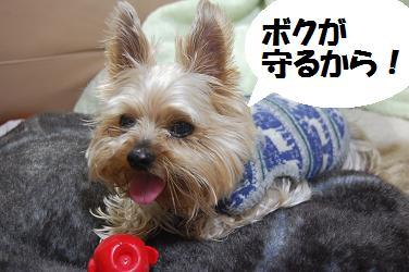 dog147.jpg