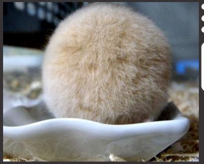 日記3・12にんじん食い5