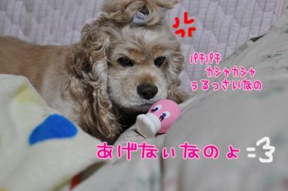DSC_0082コピー①