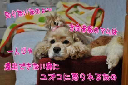 DSC_0853コピー