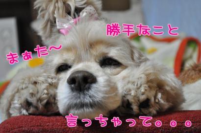DSC_0860コピー