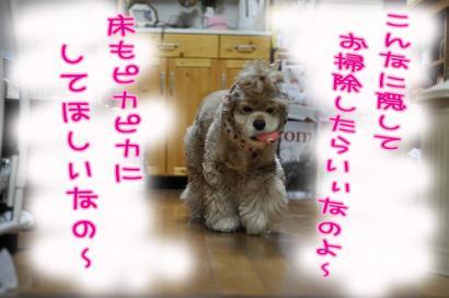 DSC_0016コピー