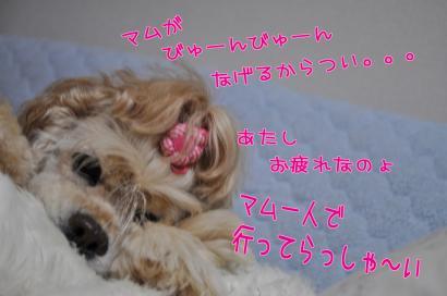 DSC_8111コピー