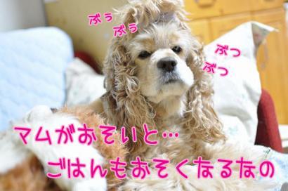 DSC_0059コピー