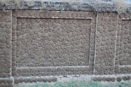 壁の牛フン