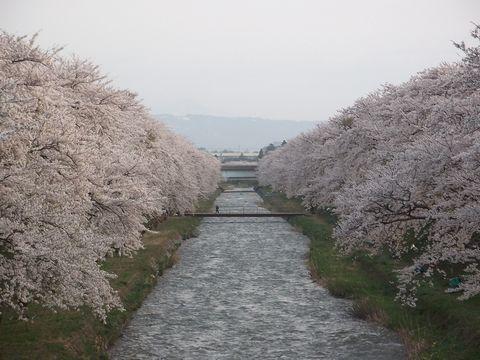 hunagawa0421-1.jpg