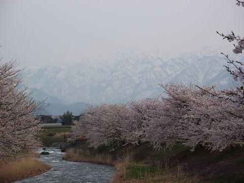 hunagawa0421-3.jpg