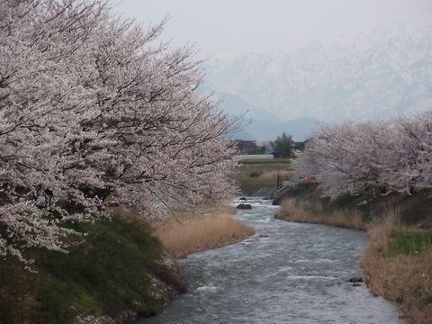 hunagawa0421-4.jpg