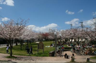 鹿助公園の桜