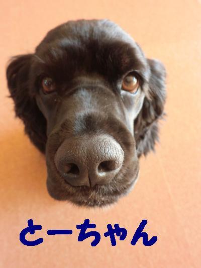 CIMG1074_convert_20110104210515.jpg