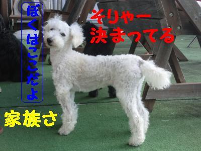 CIMG1201_convert_20110117215751.jpg