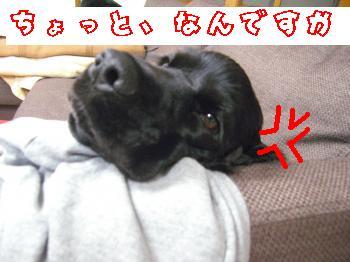 CIMG1641_convert_20110219103844.jpg