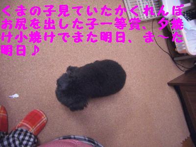 CIMG1730_convert_20101230000857.jpg