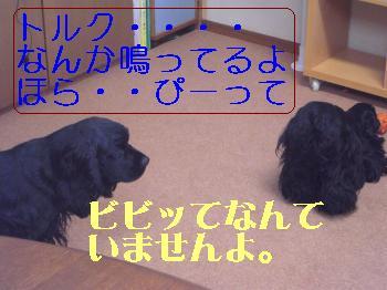 CIMG2082_convert_20110223153412.jpg