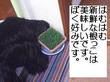 CIMG2094_convert_20110223154914.jpg