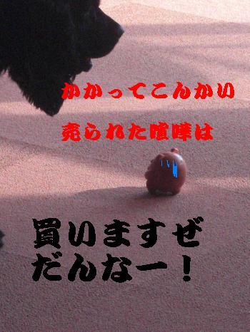 CIMG2099_convert_20110223154417.jpg