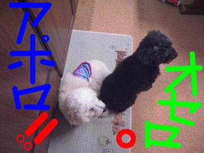 snap_kuro396_2010126195040.png