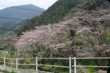 201203uwajima_09.jpg