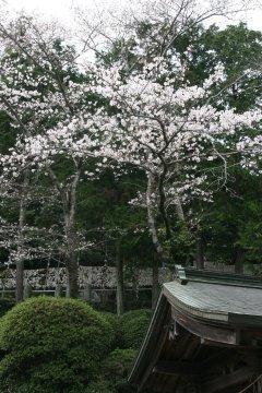201203uwajima_12.jpg