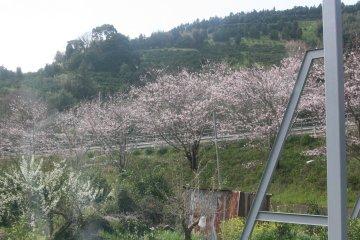 201203uwajima_13.jpg