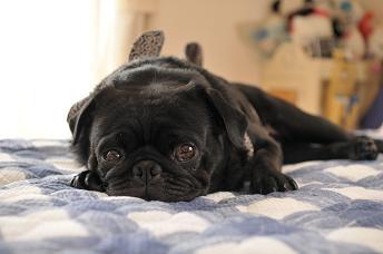 横で一緒に寝る?