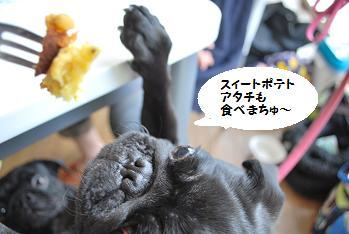 食べまちゅ