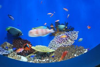 キレイな魚