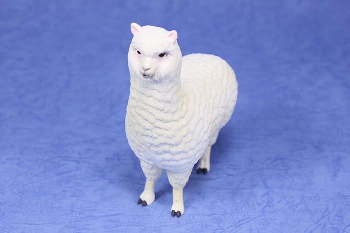 arpaca010.jpg