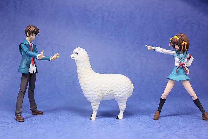 arpaca015.jpg