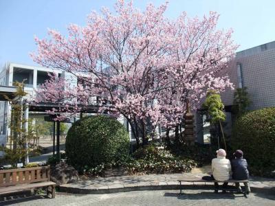 mini_21_kanhizakura_DSCF2439.jpg