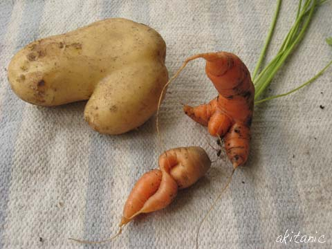 規格外野菜2
