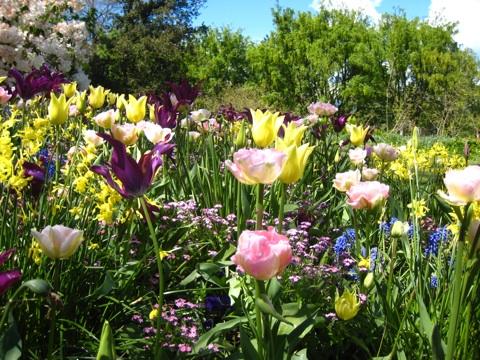 バンデューセン植物庭園3