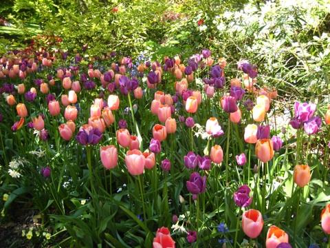 バンデューセン植物庭園2