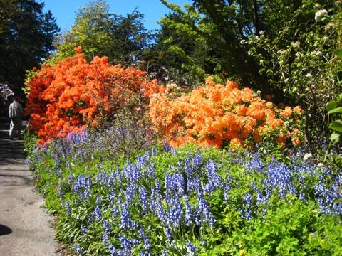 バンデューセン植物庭園4