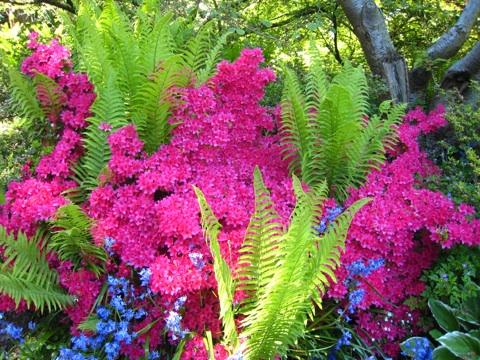 バンデューセン植物庭園5