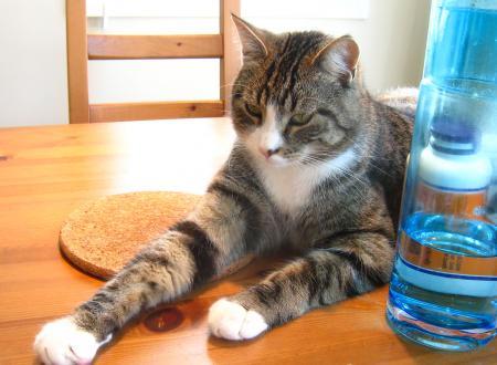 テーブル猫3